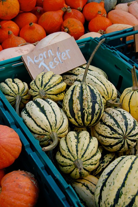 Pumpkins and Squashes, Slindon Pumpkin Festival 2015 West Sussex, Autumn Harvest, Colourful Squashes, Pumpkins