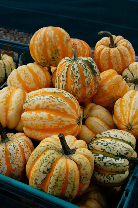 Pumpkins and Squashes, Slindon Pumpkin Festival 2015 West Sussex, Harvest, Autumn Fruits, Pumpkins, Squashes, Carnival Squashes