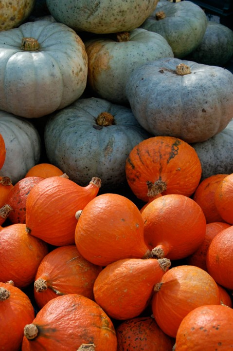 Pumpkins and Squashes, Autumn Harvest, Slindon Pumpkin Festival 2015 West Sussex,