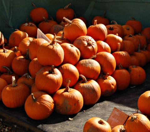 Pumpkins, Squashes, Slindon Pumpkin Festival 2015 West Sussex, Autumn Harvest, Pumpkin Festival, Autumn Squashes