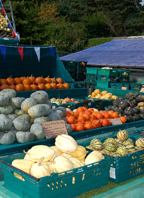 Squashes, Pumpkins, Slindon Pumpkin Festival 2015 West Sussex, Autumn Harvest